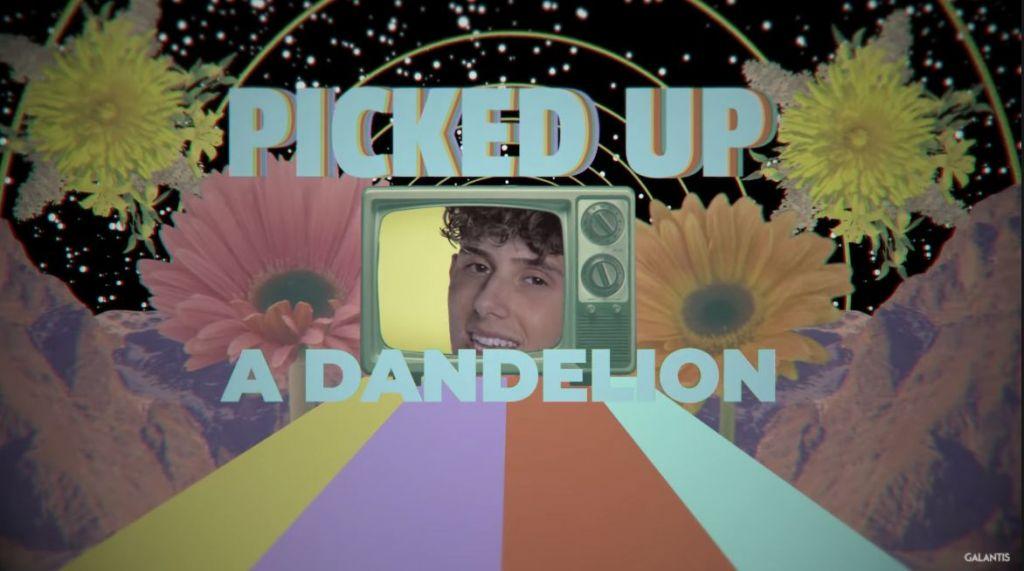 Dandelion pic